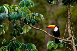 Grand Tour Brasile - Amazzonia la rotta delle emozioni