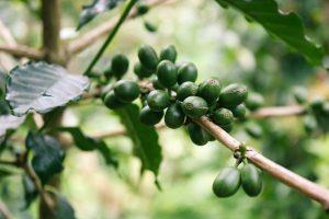 colombia dulla rottadel caffè rotta delle emozioni
