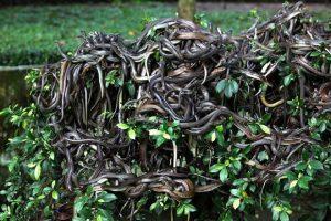 Queimada Grande, l'isola dei serpenti la rotta delle emozioni