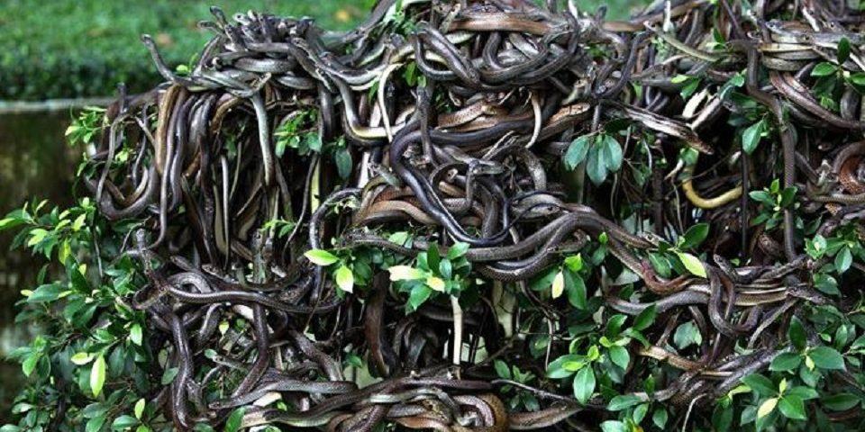 Queimada Grande, l'isola dei serpenti