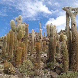 bolivia b-cactus la rotta delle emozioni