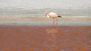 bolivia b-flamingo la rotta delle emozioni