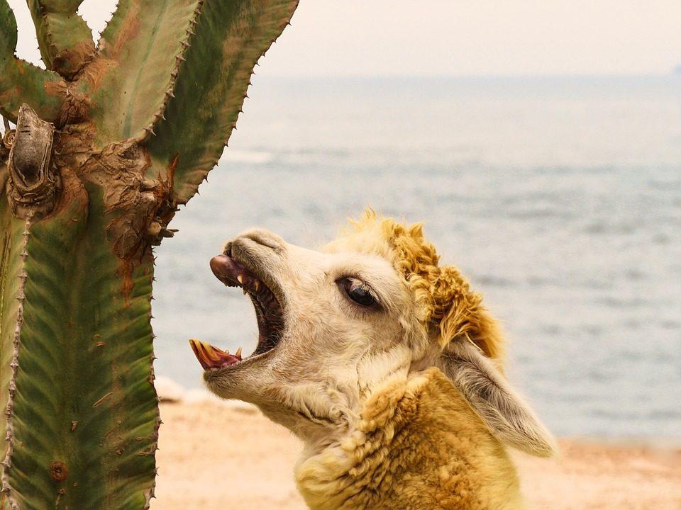 cosa mangiare in perù la rotta delle emozioni
